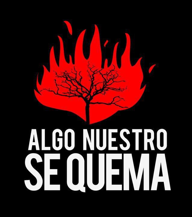 Ambiente Lanzan La Campaña Alto El Fuego Cada árbol Vale